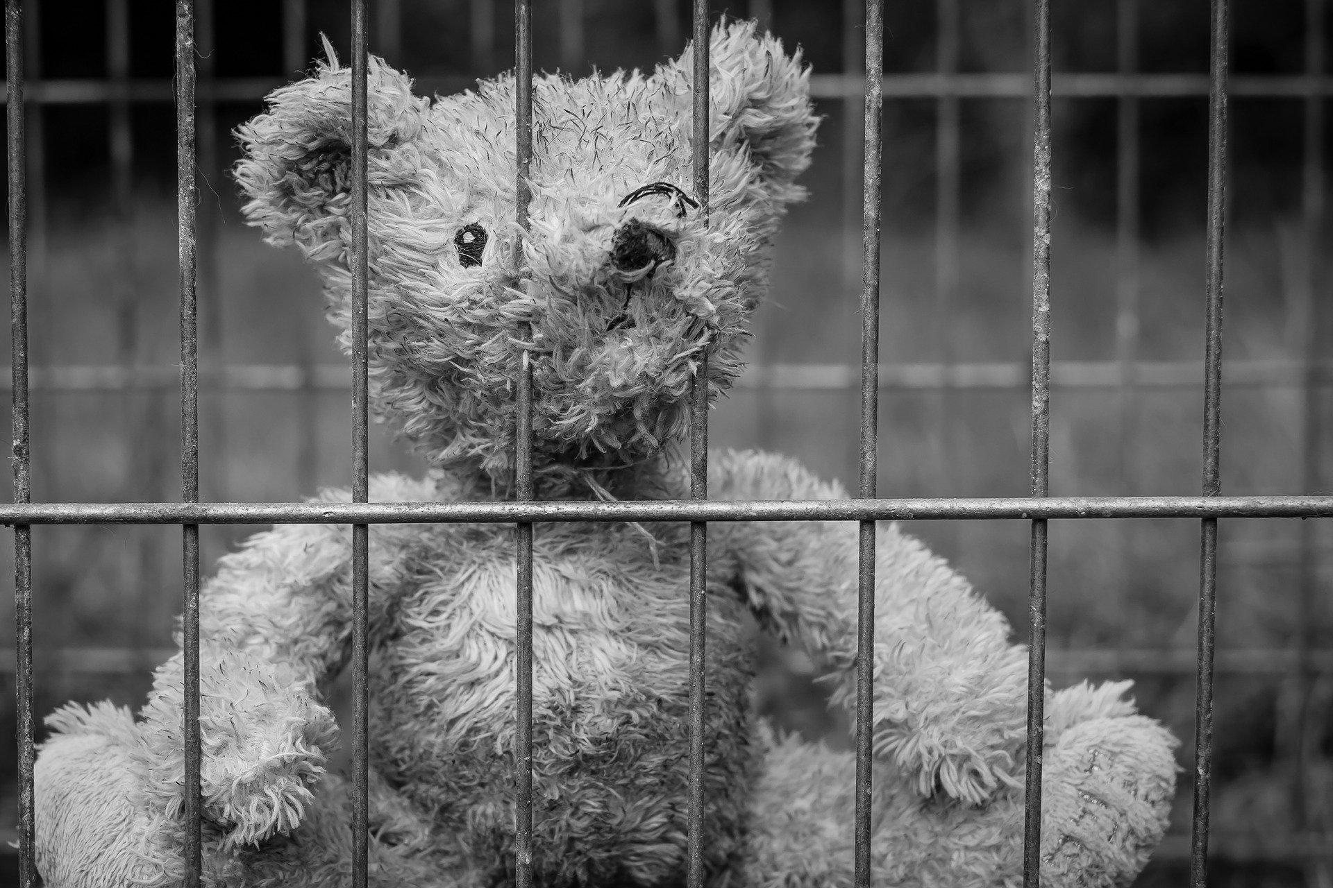 teddy-2711675_1920